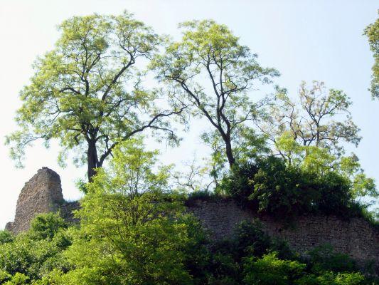 Ruiny rycerskiego zamku w Podgrodziu k. Ćmielowa