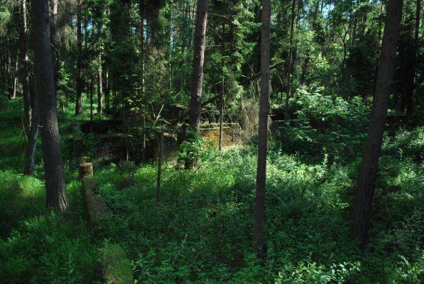 Ruiny kopalni w lesie Pasieki