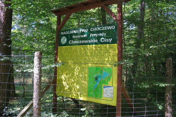 Rezerwat przyrody Choczewskie Cisy