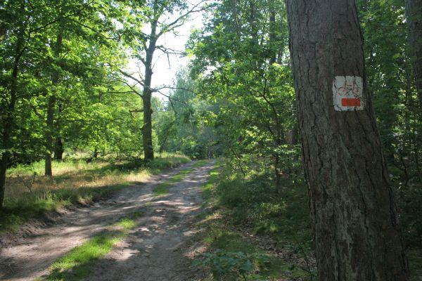 Ścieżka rowerowa w okolicach Sasina