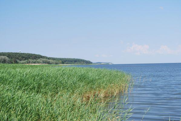 Widok w kierunku granicy z Piasków na Mierzei Wiślanej