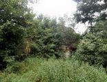 Dwór w Bieździadce - ruiny
