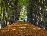 Park Miejski w Siemianowicach Śląskich