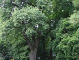 16141 małopolskie gm Skawina Wielkie Drogi park 1