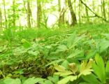 Las Bytynski (Huby Grzebieniskie, nat. res (3)
