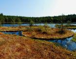 Rezerwat Jeziorka Kozie