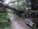 Rezerwat przyrody Madohora 2BMa2