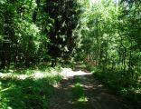 Rezerwat Świetlista Dąbrowa