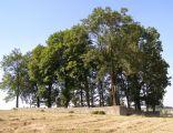 Ryglice cmentarz wojenny