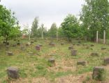 Cmentarz żydowski w sierpcu