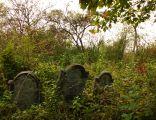 Jewish cemetery in Malogoszcz Maligoshtch cmentarz żydowski 2 poł XIX w Małogoszcz 18