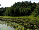 Jezioro Chomiąskie 2009-07