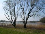 Jezioro Rogowskie