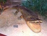 MEPAN kapitozaur (Cyclotosaurus)