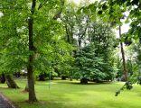 Zabytkowy park przy pałacu w Trzęsaczu