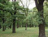 Poznań Park Manitiusa