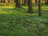 Public park in Nysa - Poland in spring