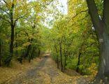 Park na Wzgórzu Wolności w Bydgoszczy