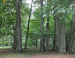 Park w Boninie