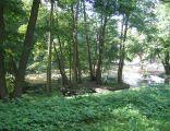 Park przy zamku Wedlów w Tucznie