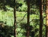 Piecki Jezuickie - akwen przez drzewa