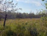 PL Źródła Tanwi nature reserve 2