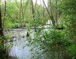 Rezerwat przyrody Augustowo