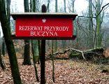 Rezerwat Buczyna
