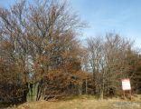 Czantoria, přírodní rezervace