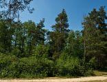 Rezerwat Kołacznia