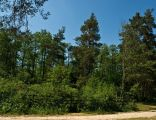 Nature reserve Kolacznia 53528707