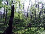 Rezerwat Las Bielański