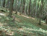 Rezerwat Ostrężnik