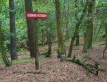 MOs810, WG 2014 48, powiat obornicki (rezerwat Promenada) (4)