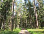 Podlaskie - Knyszyn - Puszcza Knyszyńska - Rez. Wielki Las - Droga 01