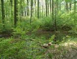 Poland - Wzgorze Joanny Nature Reserve