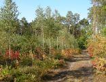 Park Krajobrazowy Rogalin