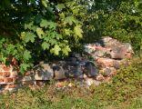 Ruiny zameczku XVI wieku 02, Wola Wężykowa