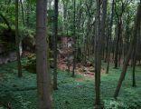 Rezerwat Sokole Góry 21.07.2012 p3