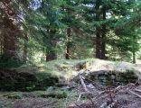 Ruiny schroniska na Trzech Kopcach w Beskidzie Slaskim