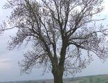 Mogiła kosynierów w Dziemięrzycach, w tle pola bitewne