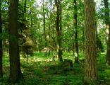 Bory Niemodlińskie - rezerwat Jaśkowice