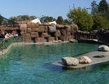 Wybieg uchatek kalifornijskich - zoo w Opolu